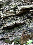 rocks and moss 2 adj.jpg (183484 bytes)