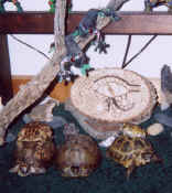 tortoises and toads 3-03.jpg (85654 bytes)